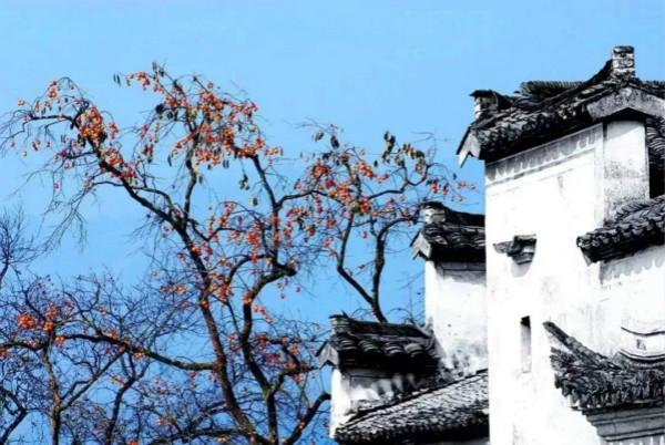 黄山徽韵,婺源梦里老家,瓷都有约,4天3晚探访之旅